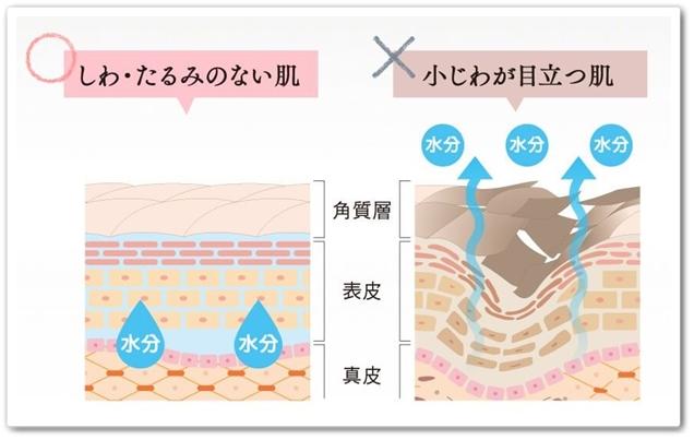 ハリハリミチル 口コミ 肌にハリが出る化粧品 はりはりみちる 効果 小じわ たるみ 肌比較