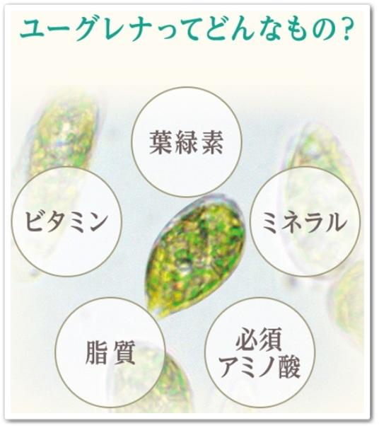 ユーグレナoneワンオールインワンパワーリフティングクリーム 口コミ 効果 通販 最安値 980円 ミドリムシ